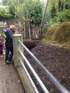 max and tapir
