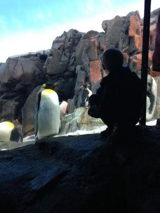 Penguins 1 Max