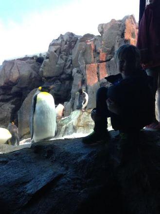 Penguins 2 max