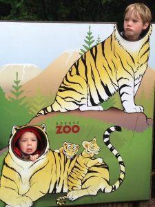 tiger boys 2