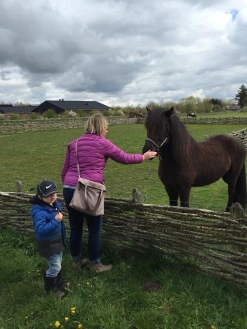 Friendly horse!